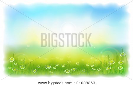 Sun-drenched Meadow With Daisies. Sunny Summer Day Outdoors.