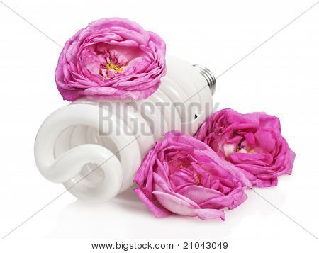Light bulb among roses