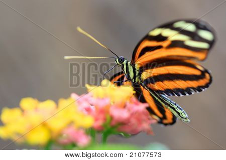 Butterly