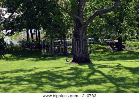 Rope Swing On Big Shade Tree