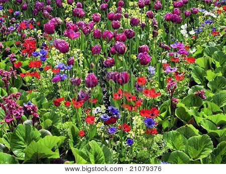 Mixed Colorful Flower Garden