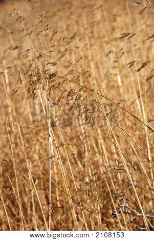 Drygrass1