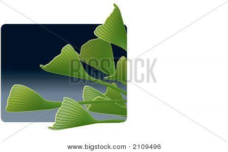 Ginkgo Tree Leaves