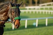stock photo of blinders  - Nice and athletic horse Racing after the race - JPG