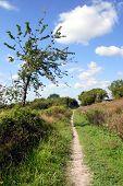 Ridgeway Footpath