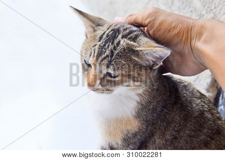 poster of Cat - Cute Cats, Cats That Are Caressed With Human Hands, Pet Cat.