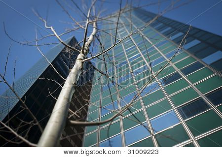 Leafless tree in front office buidings