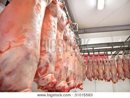 Lambs  Row