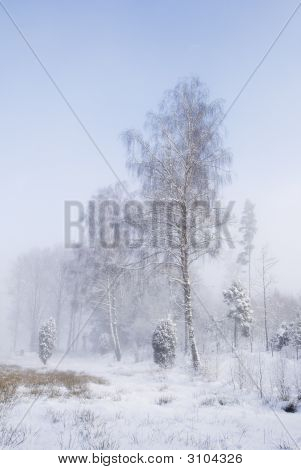 Trees In Winter Fog Against Blue Sky