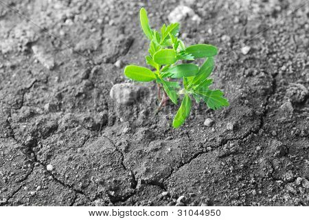 Green Plant Growing On Dry Soil