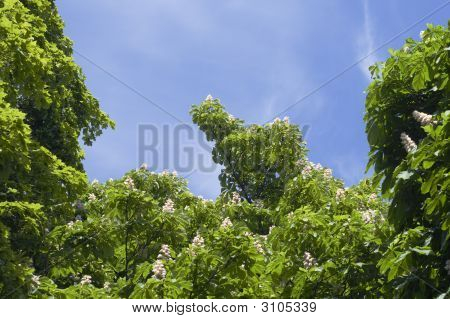Green Leaves, Blue Sky
