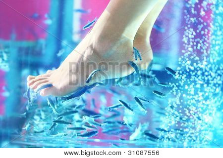 Pedicure fish spa. Rufa garra fish spa treatment. Close up of fish and feet in blue water.