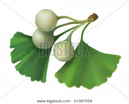 Raster illustration of ginkgo biloba (Maidenhair Tree)