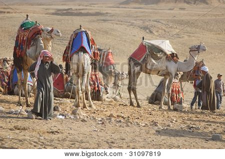 Bedoin with camels in desert