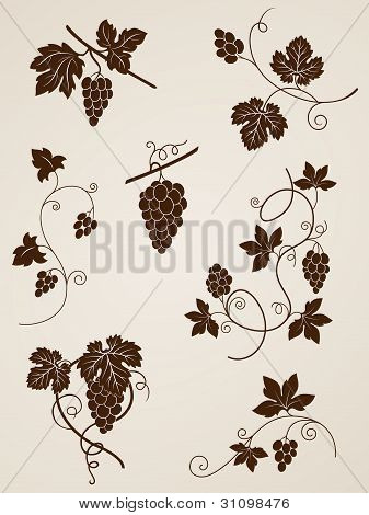 Grape Vine-Design-Elemente