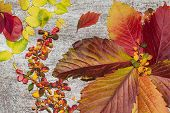 Autumn Leaf Composition. Studio Shot On Wooden Background.colorful Autumn Leaves On A White Backgrou poster