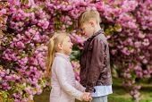Kids In Love Pink Cherry Blossom. Love Is In The Air. Couple Adorable Lovely Kids Walk Sakura Garden poster