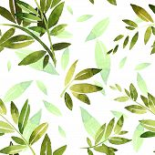 Green Branch With Foliage. Olive Branch, Bamboo Branch, Laurel Branch. Design Elements For Patterns, poster
