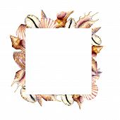 Watercolor Frame With Shells. Hand Painted Sea Shells Square Card Isolated On White Background. Naut poster