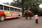 Wild Elephant, Bus And Man