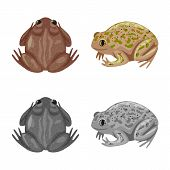 Isolated Object Of Wildlife And Bog Logo. Collection Of Wildlife And Reptile Vector Icon For Stock. poster