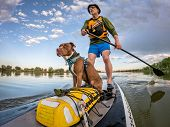 senior male paddling stand up paddleboard with his pitbull dog on lake in Colorado, summer scenery poster