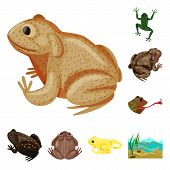 Vector Design Of Frog And Anuran Symbol. Set Of Frog And Animal Stock Vector Illustration. poster