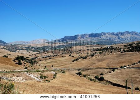 Wheatfields, Almogia, Andalusia, Spain.