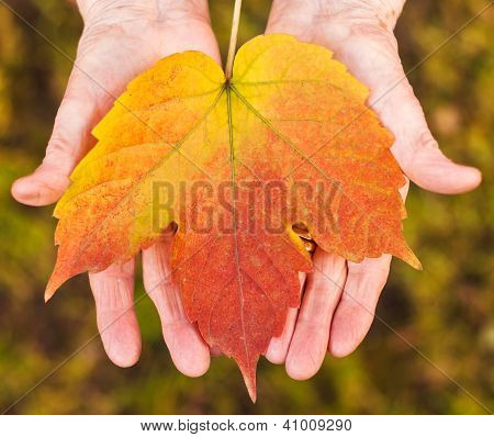 Hands Holding A Leaf