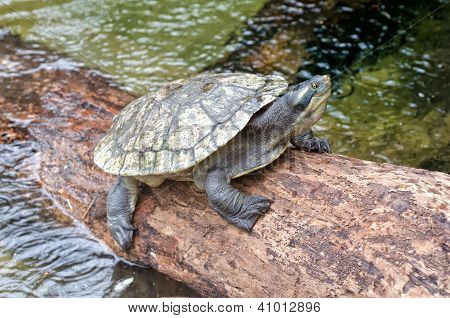 Turtle Resting On A Log