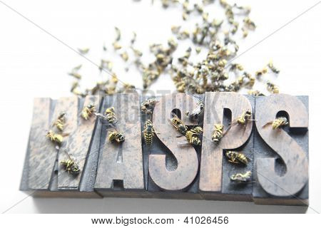 wasps word with dead and dying yellow jackets