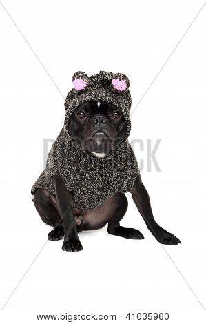 Pig Puppy