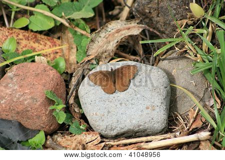 Brown Butterfly on a Rock