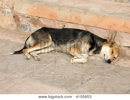Sleeping Dog