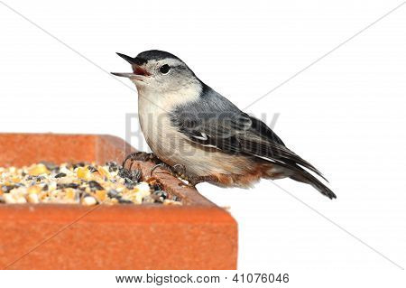 Bird On A Feeder On White