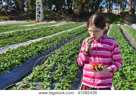 Girl Eating The Strawberry On Farm