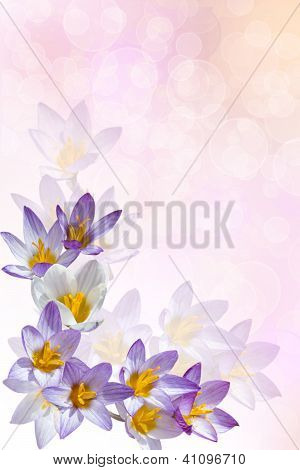Background With Crocuses