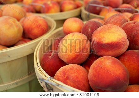 Bushel Baskets of Fresh Peaches