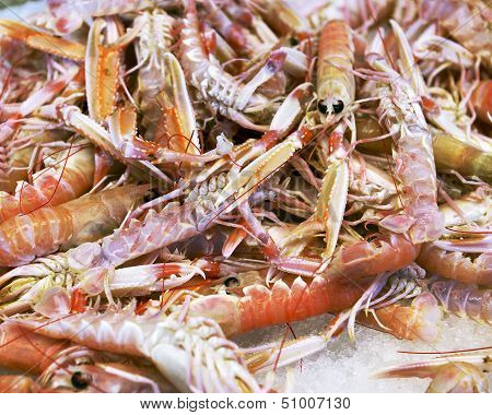 Background Of Fresh Scampi