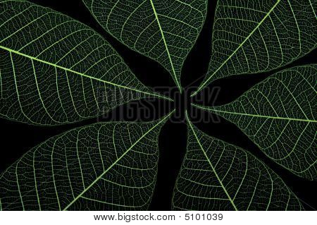 Green Leaves 3