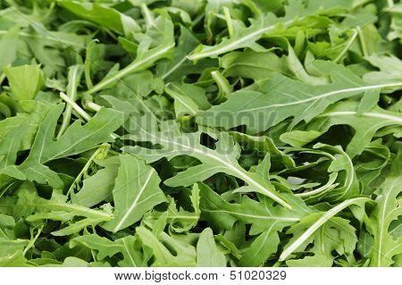 Fresh Arugula
