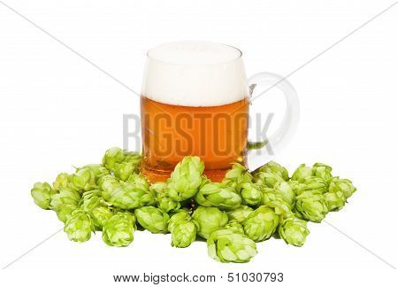 Glass Of Light Beer With Foam And Hop
