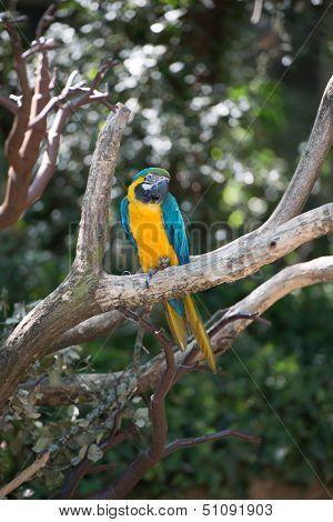 Ara Bird
