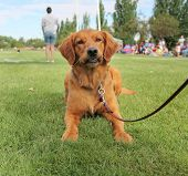 pic of spayed  - a cute dog in the grass at a park during summer - JPG