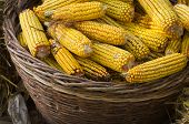 Basket full of corn