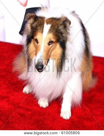 LOS ANGELES - MAR 5:  Lassie at the