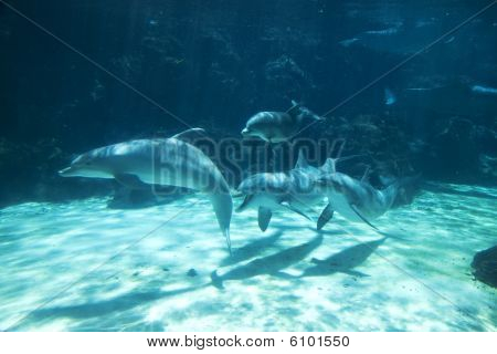 Group of dolphins swimming underwater