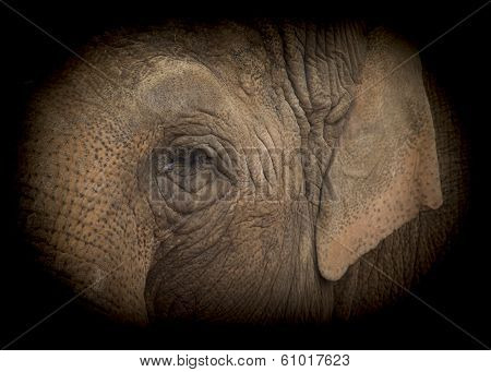 Elephant Low Key