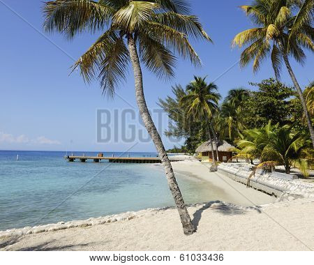 A pristine tropical beach with palm trees, turquoise waters and  blue sky.