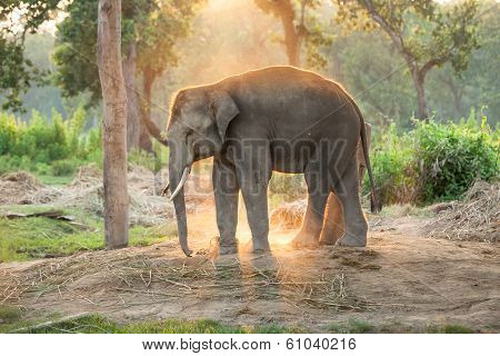 Elephant Farm Near Chitwan Nation Park In Nepal
